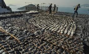 ONU: Washington dénonce la pêche illégale à la conférence sur les océans