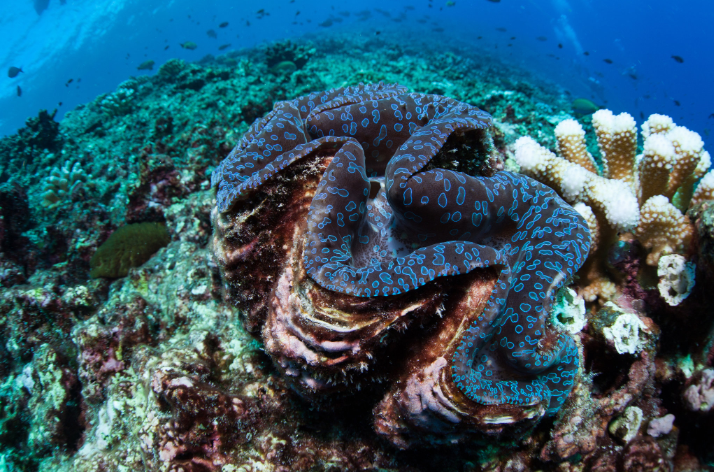 Carnet de voyage - Océanie : les sites déjà classés par l'Unesco en attendant Taputapuatea…