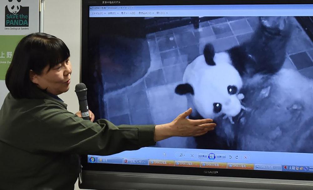 Le bébé panda né lundi au Japon se porte bien
