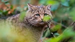 Australie: une immense clôture contre les chats
