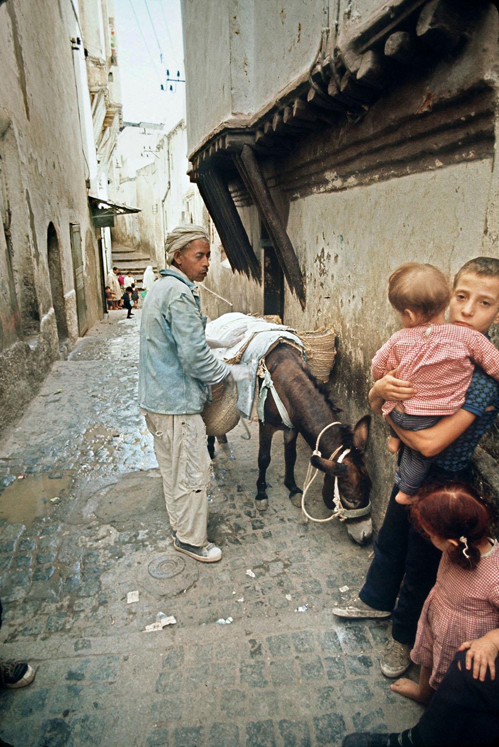 """L'âne, """"camion-poubelle"""" de la Casbah d'Alger depuis cinq siècles"""
