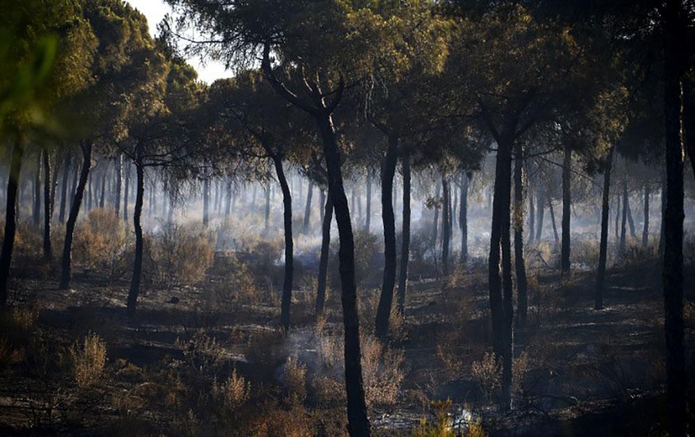 """Espagne: l'incendie """"contrôlé"""" en Andalousie"""