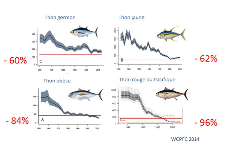 Biomasse des 4 espèces principales de thon dans le Pacifique occidental et central (la ligne rouge est le Rendement Maximal Durable, la limite à ne pas franchir pour ne pas menacer l'espèce) (CPS 2014).