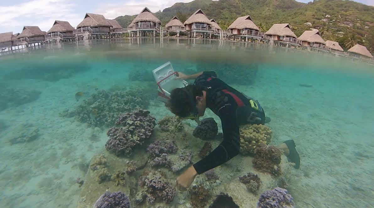 Moorea : des jeunes s'engagent pour sauver les coraux