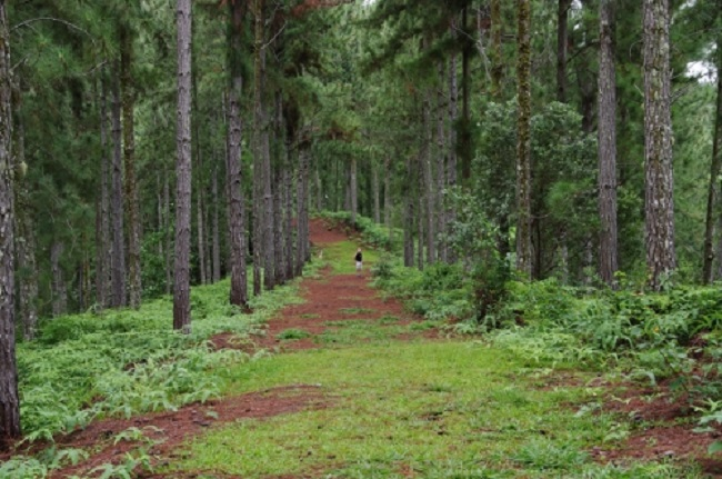 Un parcours aventure prévu à Vaipahi pour 2018