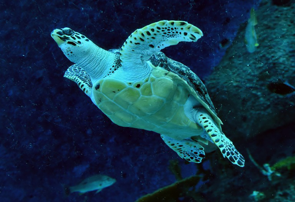 Gironde: une tortue luth de plus de 300 kg retrouvée morte sur une plage