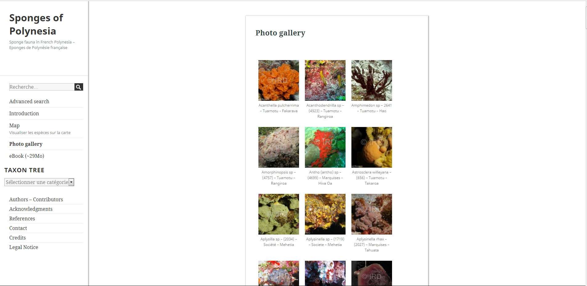 Une base de données recense plus de 200 spongiaires polynésiens