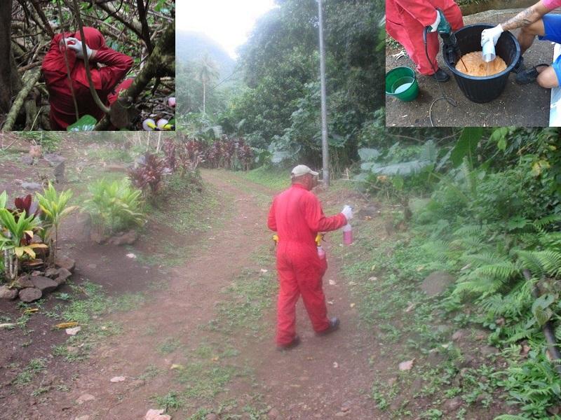 Le traitement nécessite de préparer le produit à base de beurre de cacahuètes sur place puis de le répandre à la main. (crédit photo : EURL JC AGI Pestcontrol)