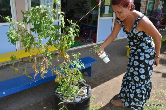 Depuis deux ans, l'école Fareroi Maternelle développe la permaculture.