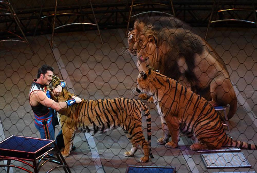 """Animaux en captivité: les cirques dénoncent une """"campagne de dénigrement"""""""