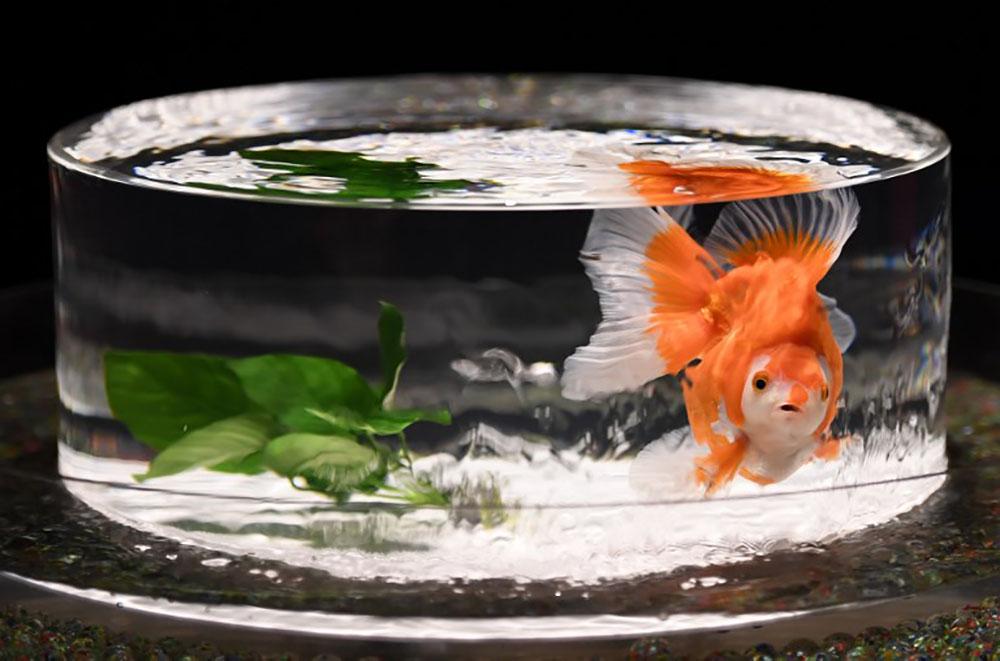 Louer un poisson pour la nuit, l'idée insolite d'un hôtelier belge