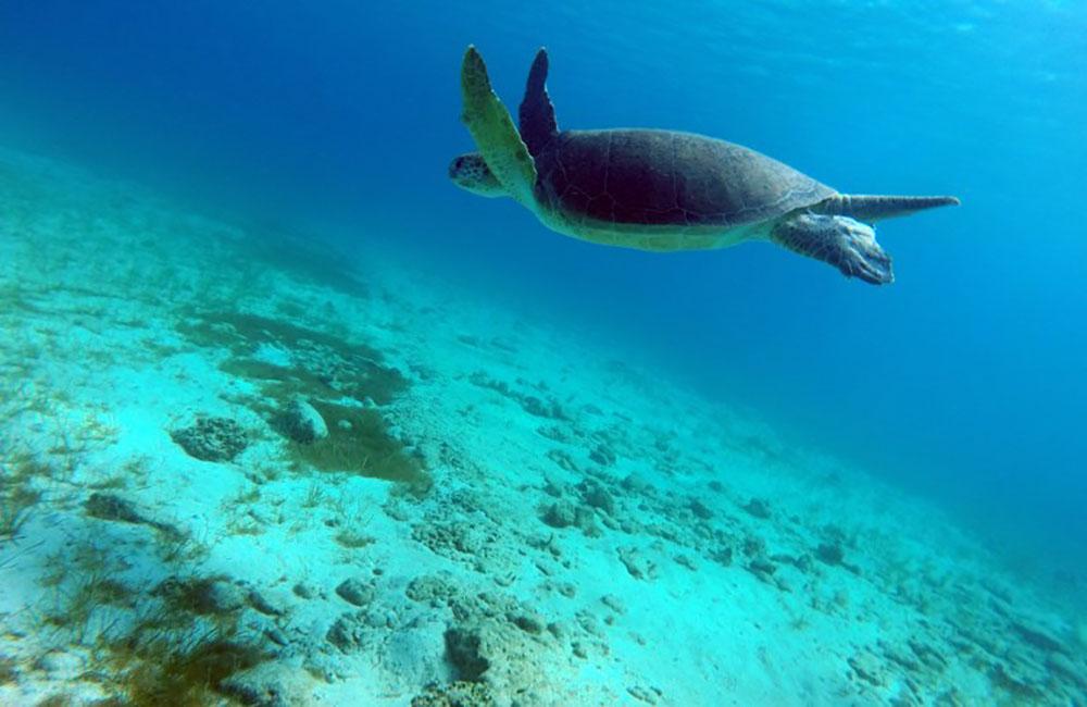 Attention tortues: pas de fête sur la plage pour de riches mariés russes
