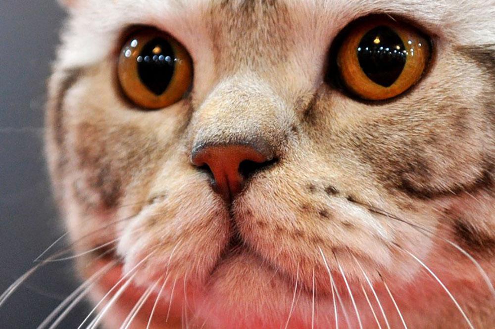 La Fondation 30 millions d'amis sauve 130 chats vivant dans un 25 m2 à Paris