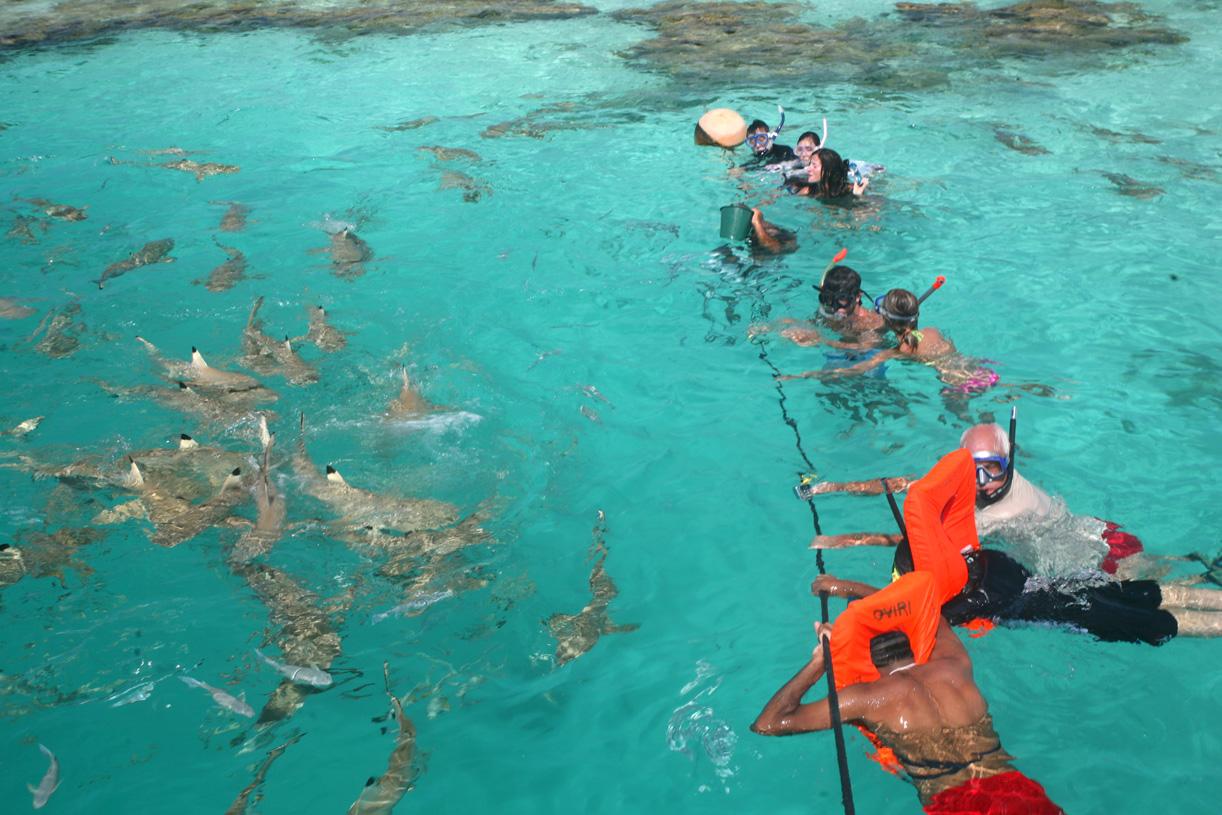 """Tous en rang, face à une meute de dizaines de requins affamés : sans doute l'un des plus beaux """"feedings"""" de Polynésie française, accessible à tous."""