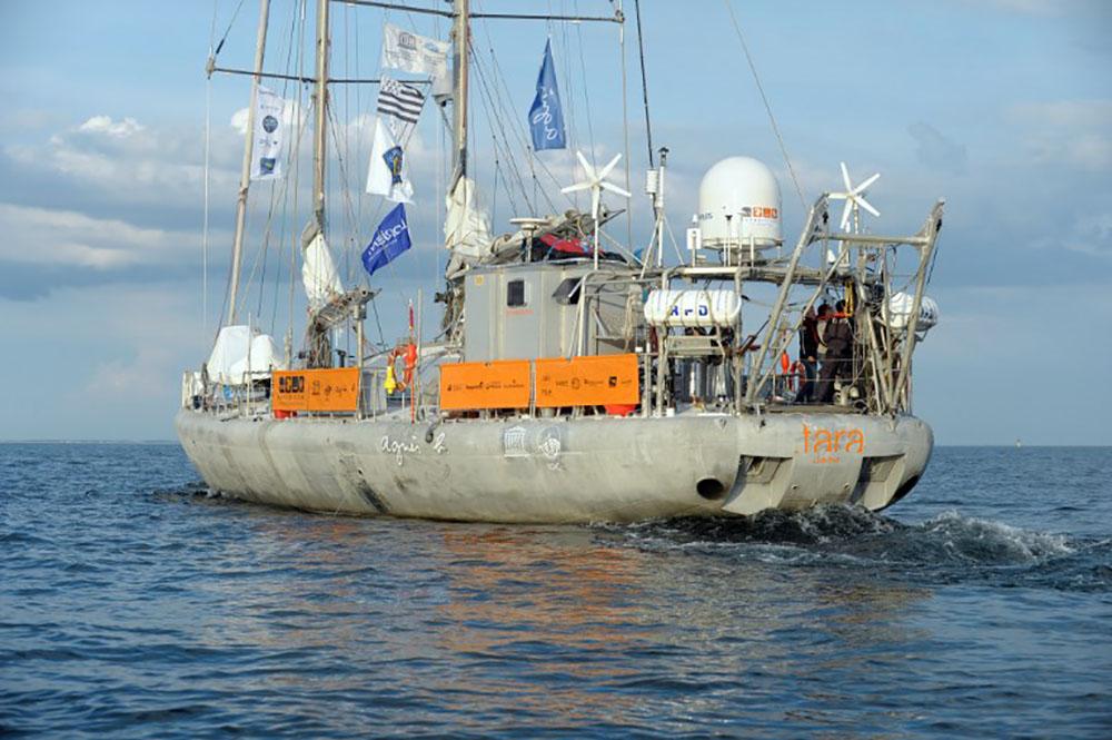 L'expédition Tara se penche sur l'impact du guano sur les coraux