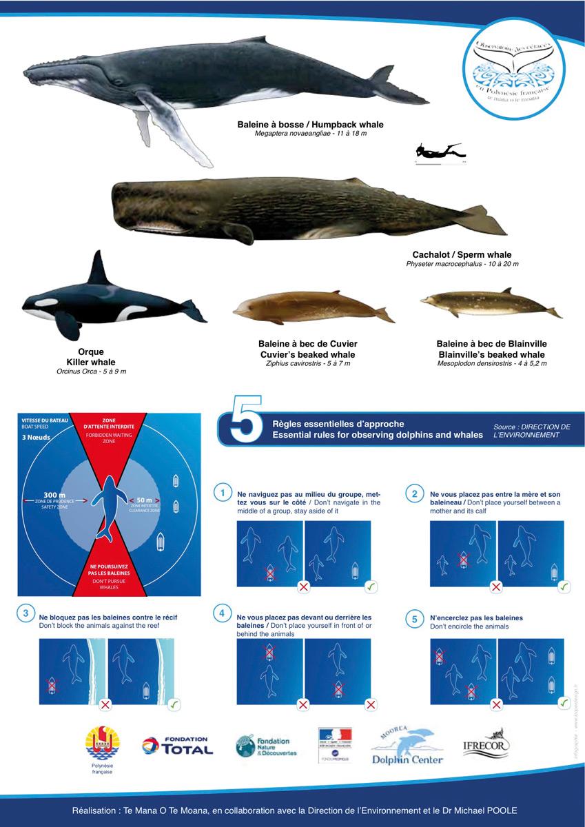 Une journée de contrôle des observateurs de baleines avec la gendarmerie maritime