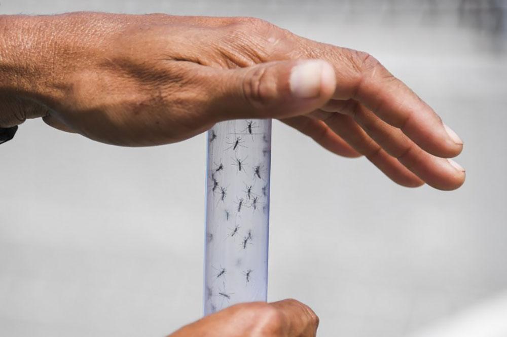 Un cocktail d'anticorps bloque le virus Zika chez des singes
