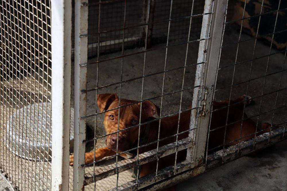 A Bagdad, des animaux des rues sauvés grâce aux réseaux sociaux