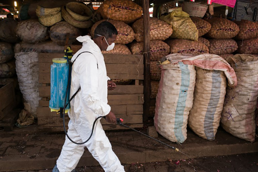 La peste réapparaît presque chaque année à Madagascar, généralement de septembre à avril.