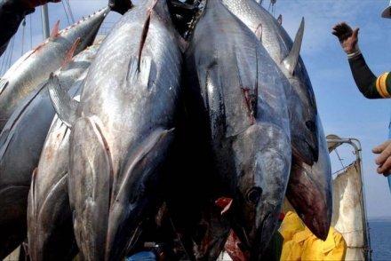 Samedi, des marches sont organisées dans les  îles de l'archipel des Marquises et à Papeete, pour manifester contre le projet de pêche industrielle du groupe Degage.