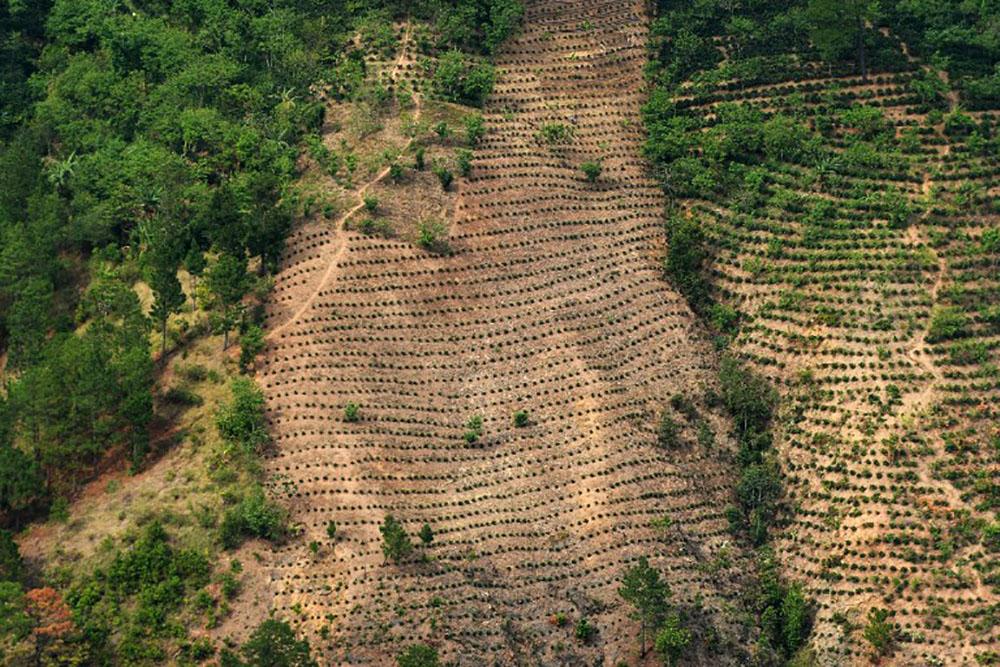 La perte des surfaces boisées mondiales a bondi de 51% en 2016