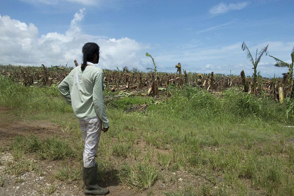 Maria: les agriculteurs guadeloupéens sinistrés obtiennent un délai pour déposer leur dossiers