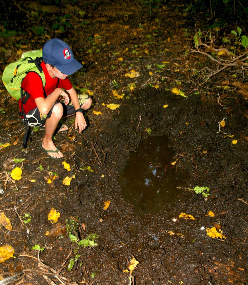 Un jeune visiteur vient de découvrir une bauge à cochons sauvages, où les suidés aiment venir se vautrer pour se rafraîchir.