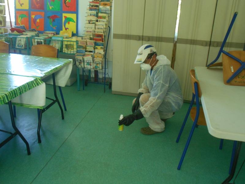 Prolifération de puces à l'école de Maharepa : l'établissement fermé pour deux jours