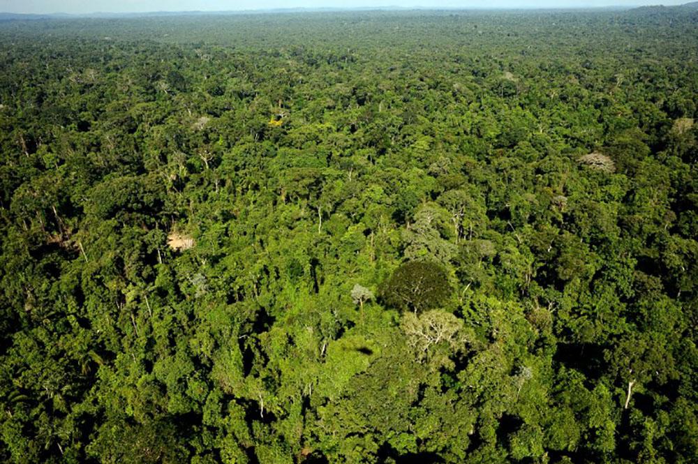 Brésil: 60 millions d'hectares de forêts tropicales préservés
