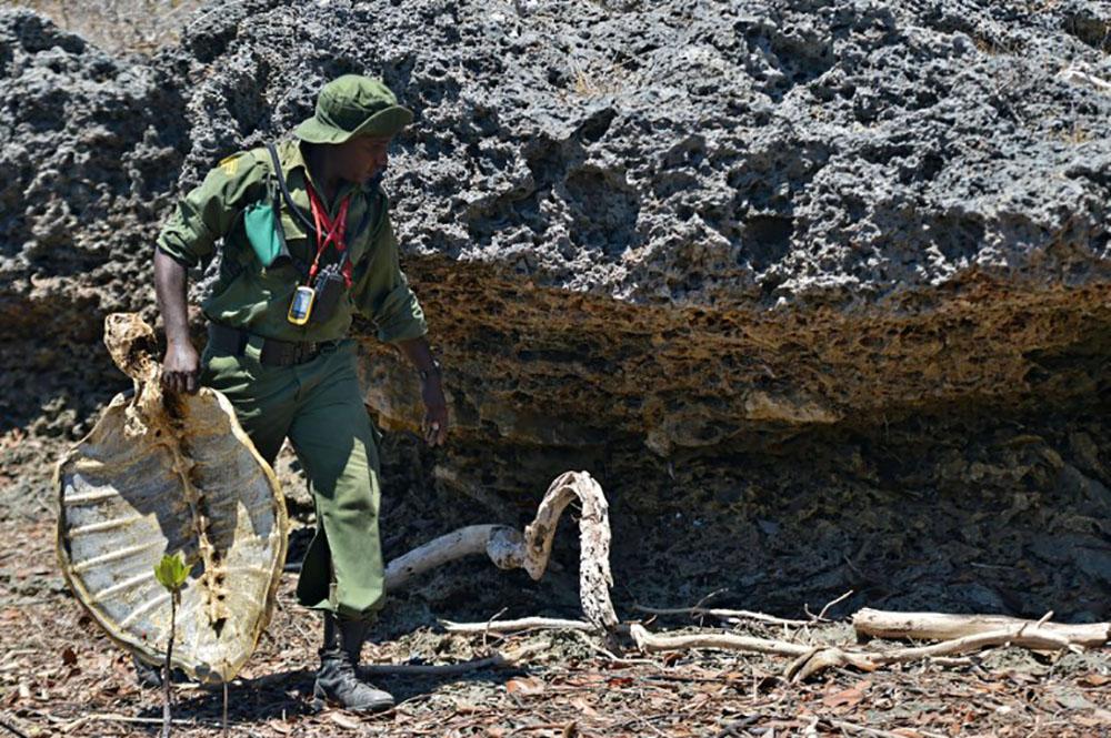 Sur la côte kenyane, le triste sort de tortues assaillies par le plastique