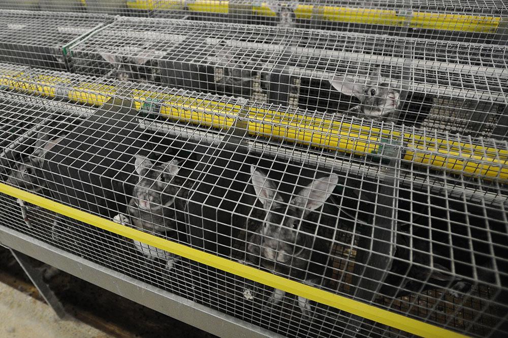 Fourrure: L214 dénonce les conditions d'élevage de lapins
