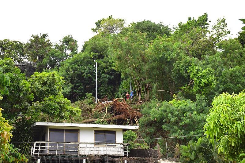 Un arbre déraciné dans le quartier Amiot