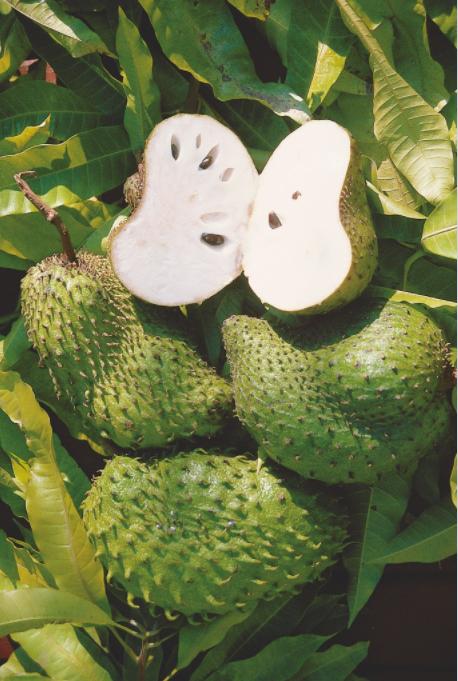 Carnet de voyage - Annonacées : des fruits gourmands dans votre jardin