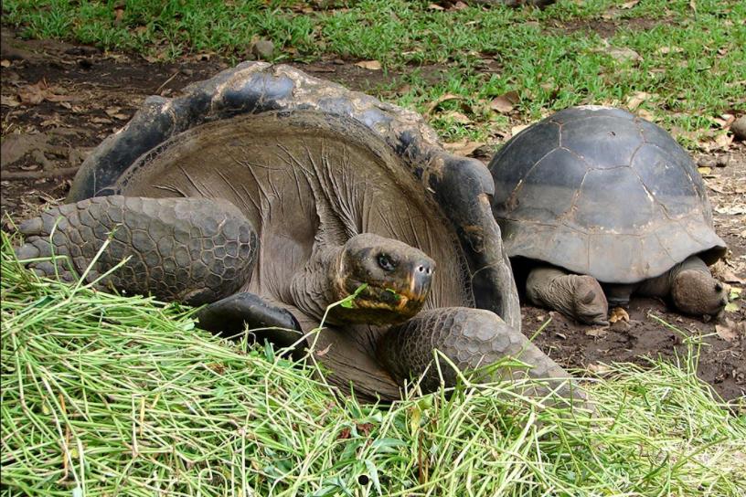Tortues des Galapagos du jardin botanique de Tahiti