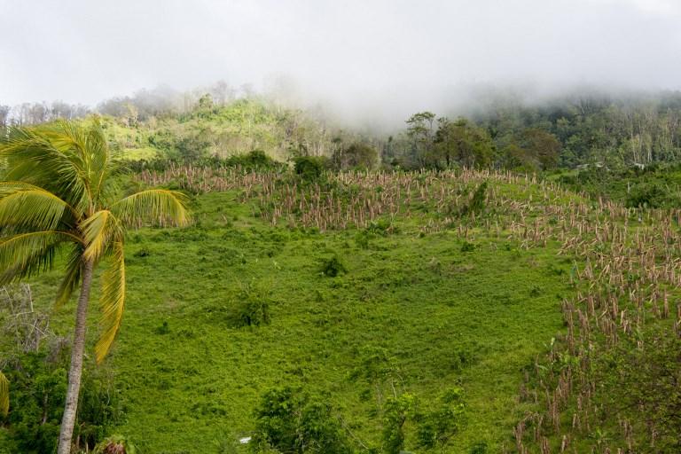 Inquiétude autour de l'indemnisation des victimes du chlordécone aux Antilles