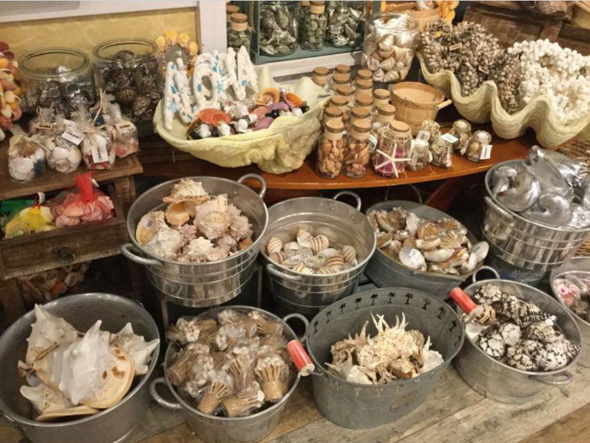 Un échantillon de souvenirs vendus dans une boutique de Hawaii ; tout y passe, coquillages, étoiles de mer, coraux et même des petites mâchoires de requin !