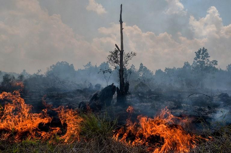 Indonésie: récompense d'un million de dollars pour la protection de l'environnement