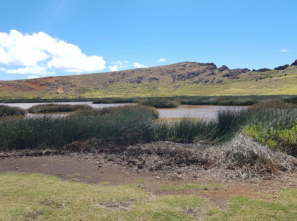 De la terre, des « totoras » (roseaux) mal en point, et un fond d'eau boueuse… Le lac du Rano Raraku est méconnaissable.