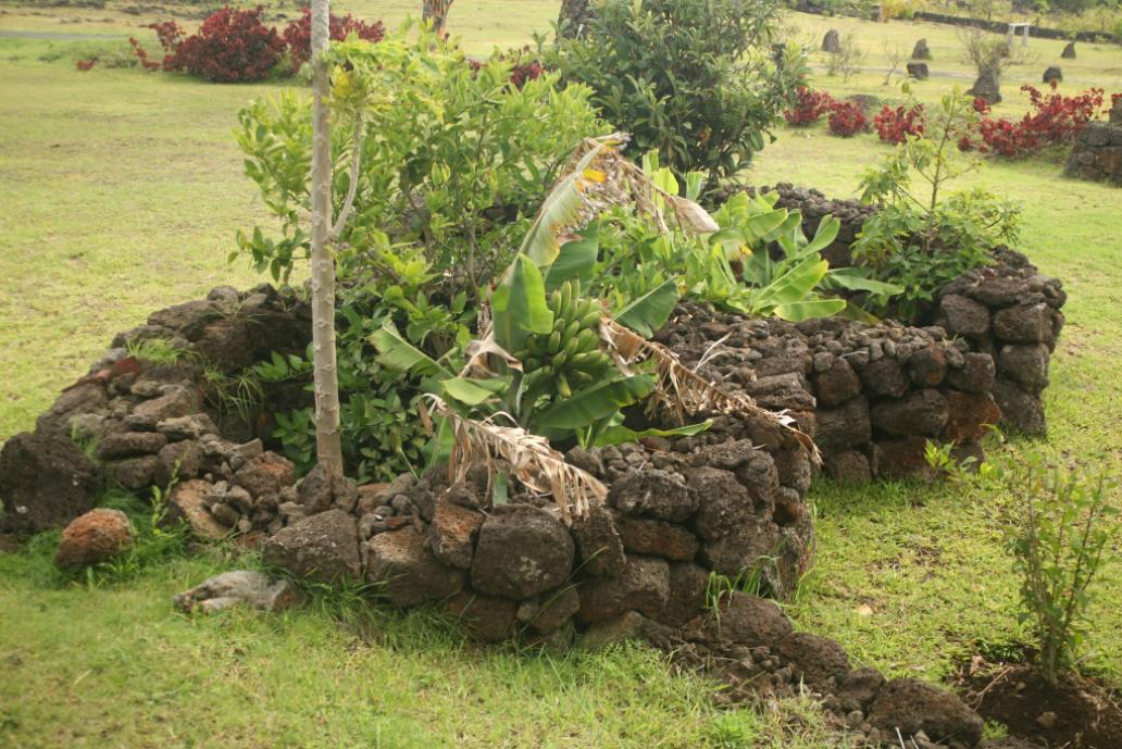 Les immenses champs de pierres de l'île étaient cultivés nous dit-on ; c'est évidemment faux, les seuls cultures vivrières des anciens Pascuans étant cantonnées à des manavai, jardins humides et protégés du vent, du sel et des embruns par des murets.