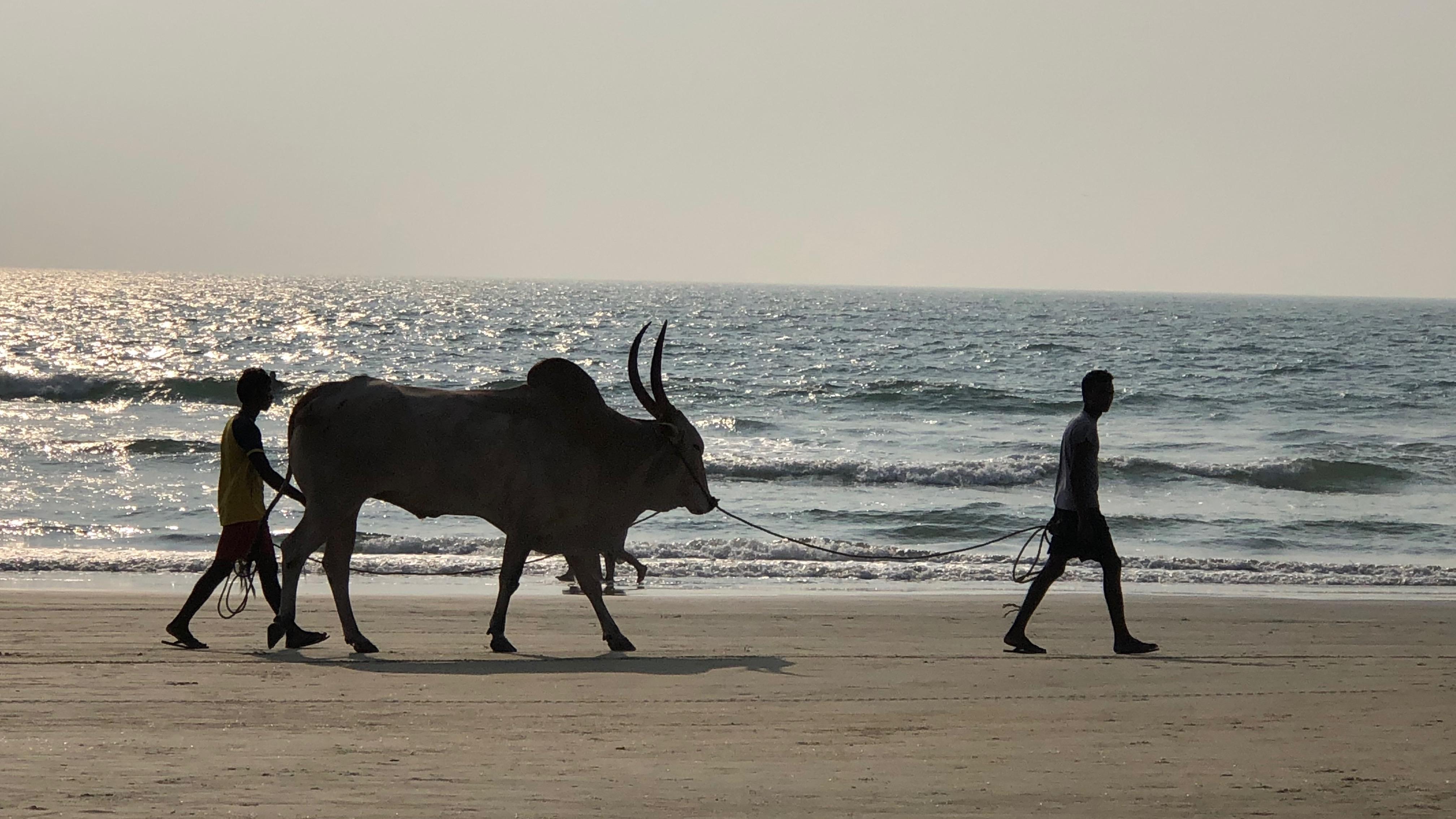 """Patrick Candé raconte son """"tour de Goa"""", un raid coloré"""