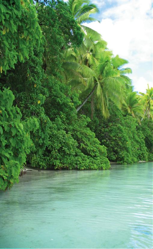 La mangrove : notre amie ou notre ennemie ?