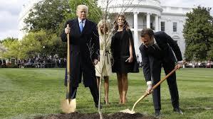 Mais où est passé l'arbre planté par Trump et Macron ?