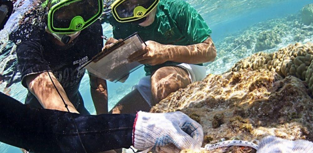 Programme d'inventaire de la biodiversité marine de Tuvalu (Sciences et avenir)