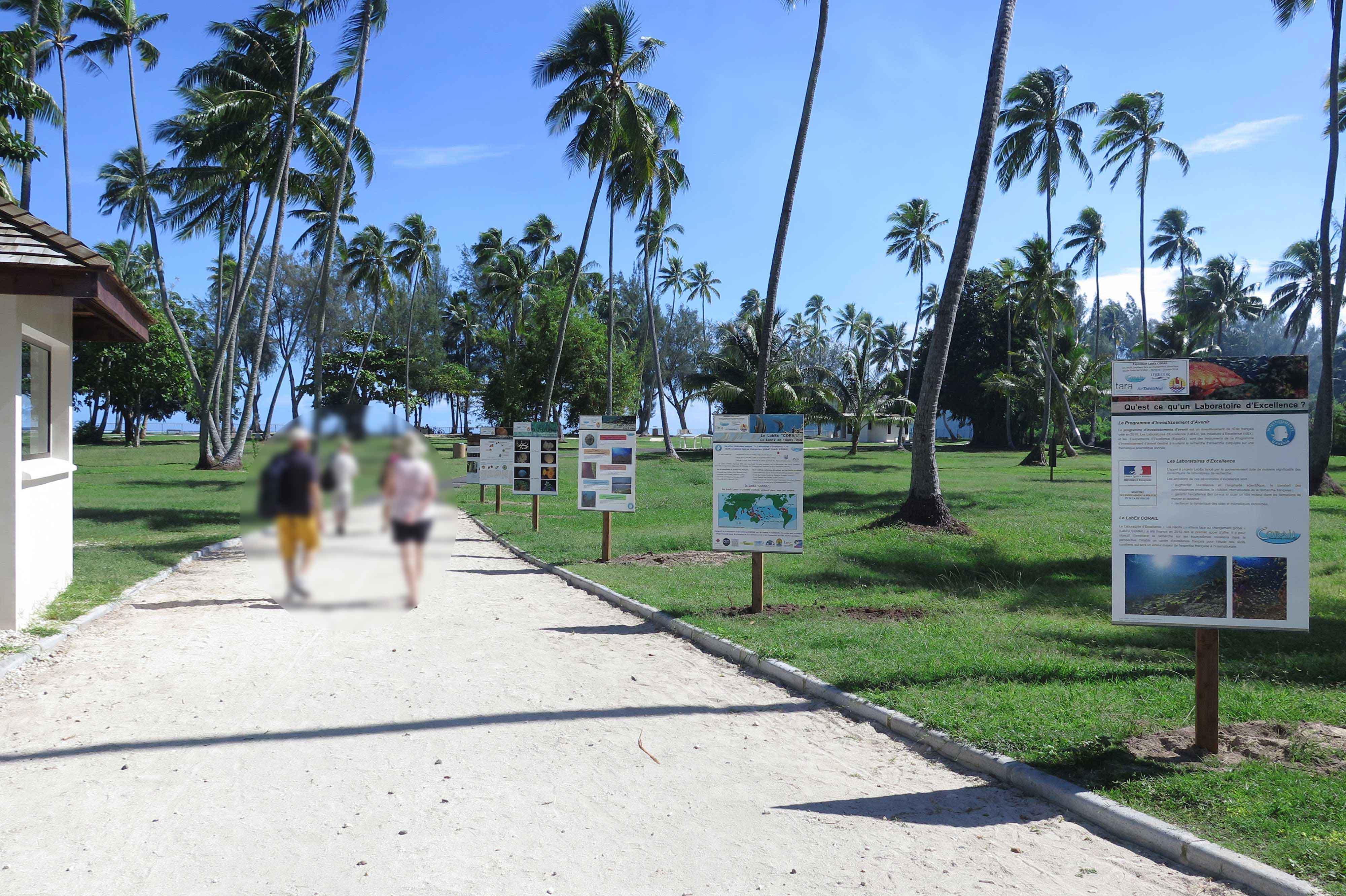 Les coraux en photos sur la plage de Tiahura de Moorea