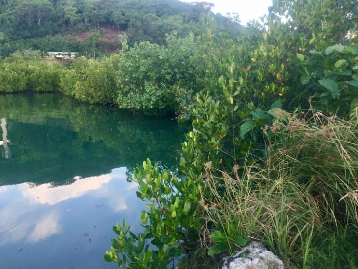 """Le projet """"Surveillons la mangrove de Polynésie française ensemble"""", a recueilli l'assentiment des électeurs."""