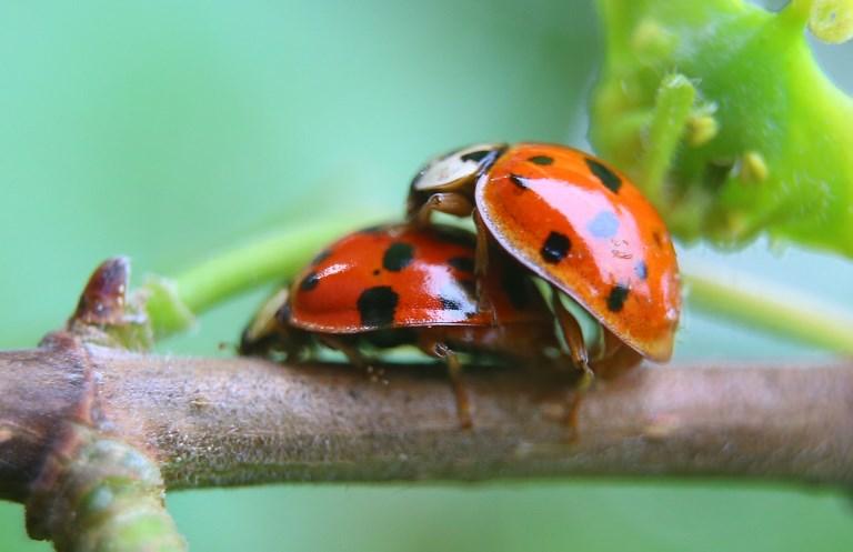 Champignons et insectes à la rescousse pour remplacer les pesticides