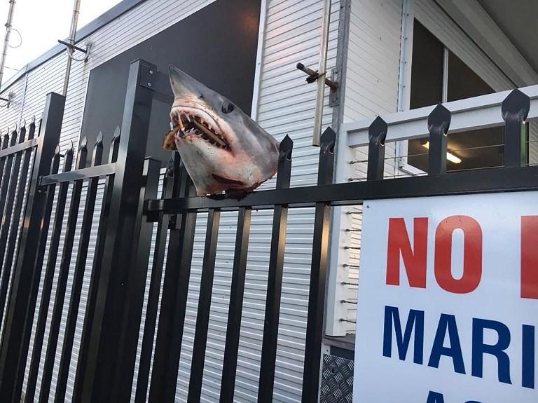Une tête de requin empalée sur une façade en Australie