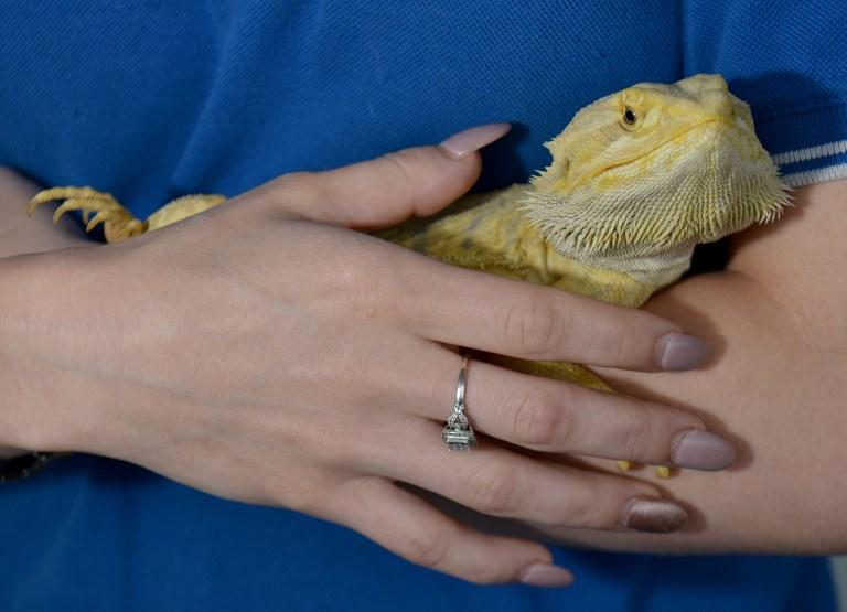 En Australie, 7% des reptiles menacés d'extinction (ONG)