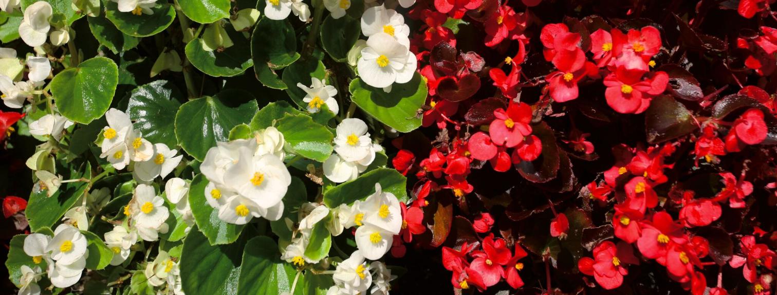 Carnet de voyage - Napier : fleurs, Art Déco et air marin