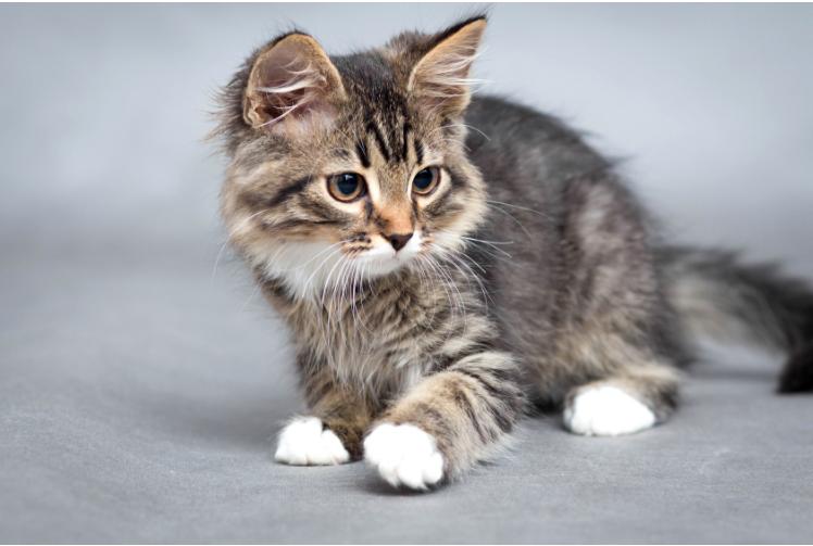 Page enfant : le chat à l'honneur !